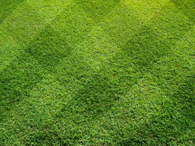 Lawn care 101 how to become a lawn mowing pro for How often should you mow your lawn