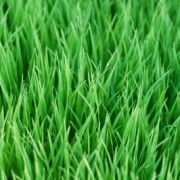 How Using Hydro Mousse Makes Lawn Repair Easy