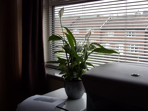 Four easy to grow indoor plants perfect for offices for Easy to keep indoor plants