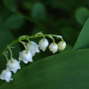 Poisonous Indoor and Outdoor Plants to Be Aware of